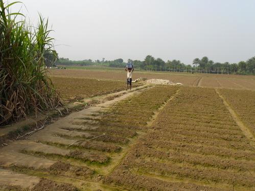 Soil in Bardhaman