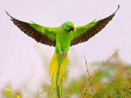 Birds at Bir Talab Zoo
