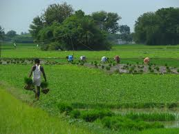Agricultural growth of Bhiwani