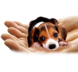 Animal Welfare in Bhiwani