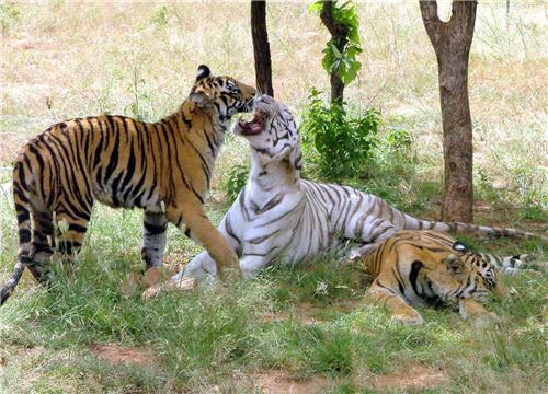 Bhopal National Park