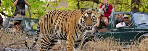 Wildlife Sanctuaries near Bhopal