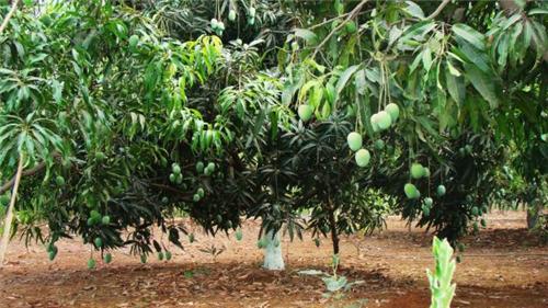 Agriculture in Bulandshahr
