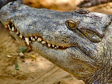 Crocodile Bank In Chennai