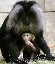 Vandalur Zoo in Chennai