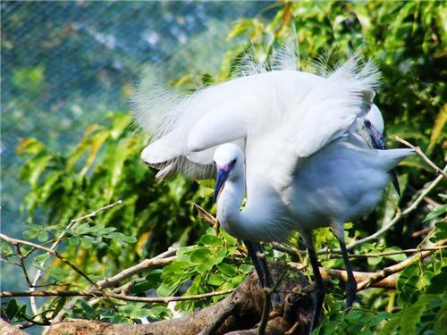 Annamalai Wildlife Sanctuary