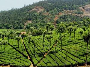 Conoor near Coimbatore