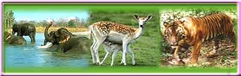 Wildlife Sanctuary in Coimbatore
