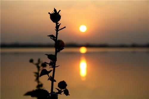 Famous lakes in Coimbatore