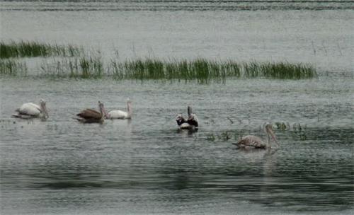 Lakes in Coimbatore