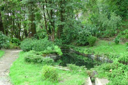 Darjeeling Llyod Botanical Garden