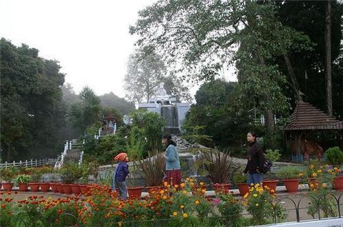 The Shrubbery Nightingale Park