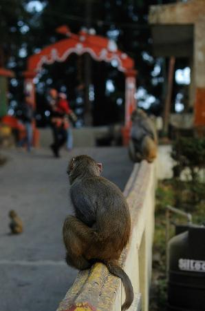 On the way to Mahakal Temple