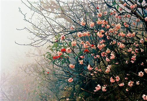 Flowers At Singalila National Park