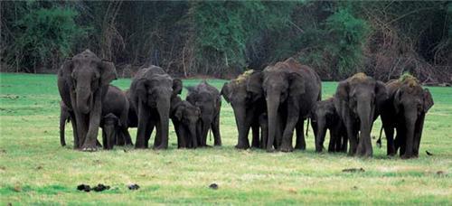 Dandeli Wildlife Reserve