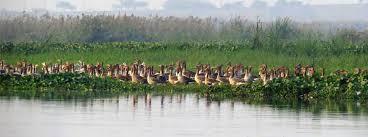 Wildlife sanctuary in Ghaziabad