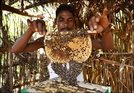 Agro-based industries in Giridih