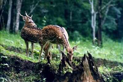 wildlife sanctuaries in Goa