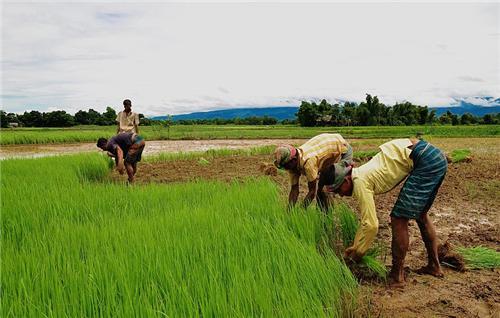 Godhra_Panchmahal_Agriculture