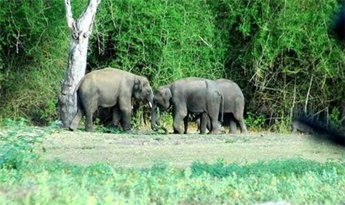 Godhra-Purna-Wild-Life-Sanctuary