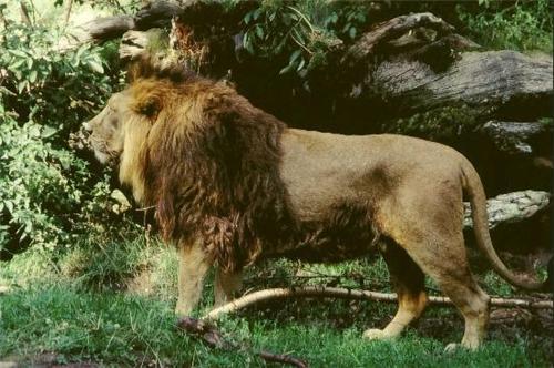 Jambughoda-Wildlife-Sanctuary-Godhra