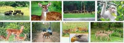 Wild Ass Wildlife Sanctuary in Gujarat