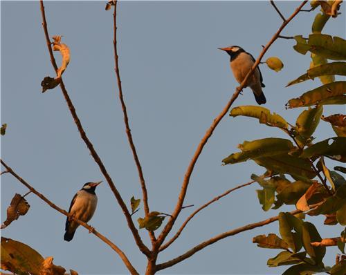 Bio-Diversity at Tau Devi Lal Park in Gurugram