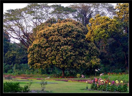 Biggest Botanical Garden in Kolkata