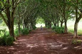 Deccan Trails Vikarabad