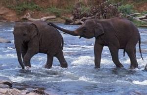 Wildlife sanctuary around Hyderabad