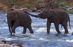 Mrugavani National park