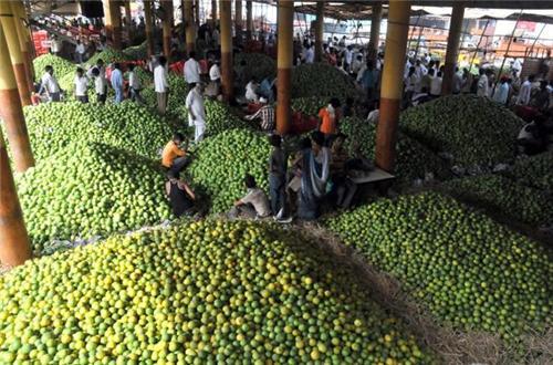 Wholesale Fruit Market Hyderabad