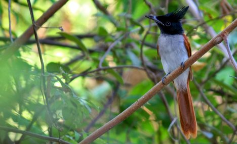 Flora and Fauna in Indore