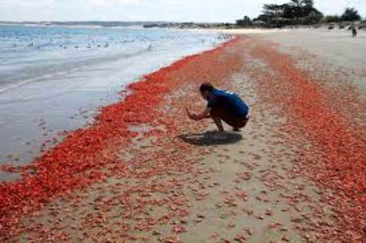 पश्चिम बंगाल के समुद्र तट