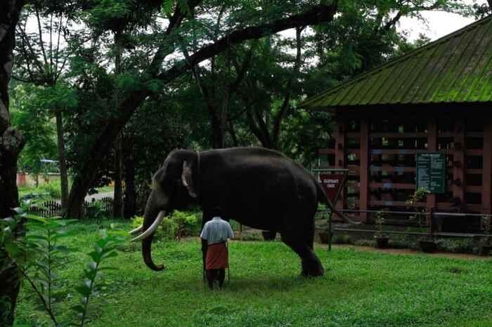 भारत में पर्यावरणीय पर्यटन