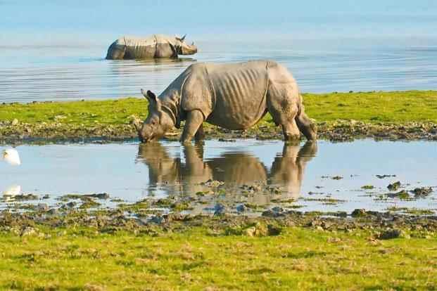 काजीरंगा राष्ट्रीय उद्यान,असम