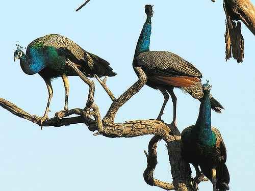 रणथंभौर राष्ट्रीय उद्यान, राजस्थान