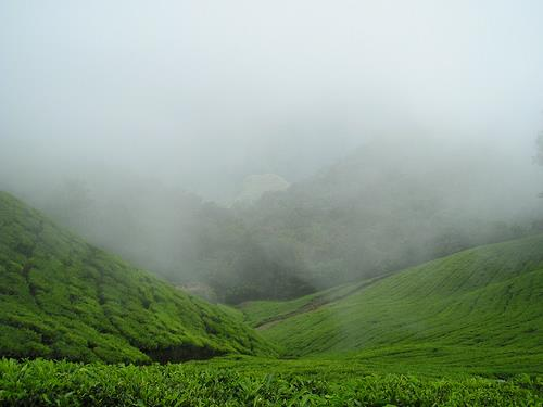 Best Places to Experience Rainfall in India