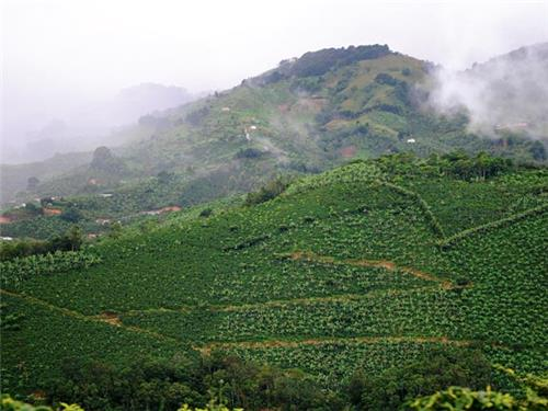 Coffee Growing Regions in South India