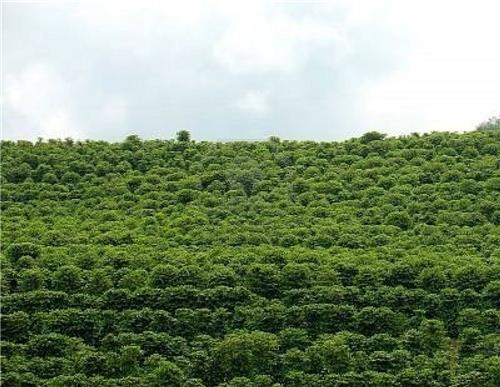 Best Coffee Plantations in India