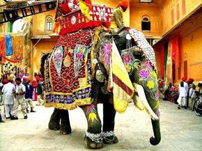 Elephant festival celebration Jaipur