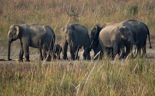 Wildlife Sanctuaries in Jalpaiguri
