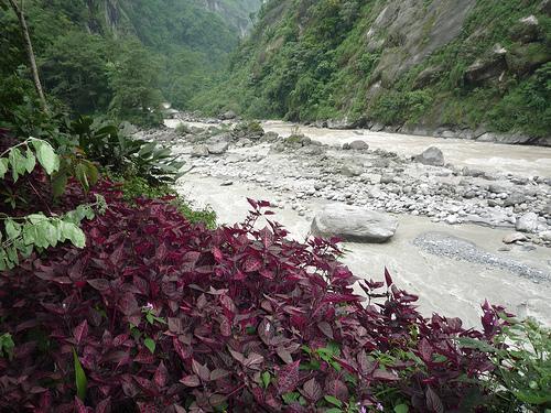 Teesta River Jalpaiguri