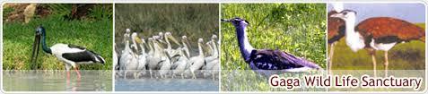 Top Wildlife Sanctuaries of Jamnagar