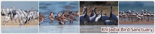 Top Wildlife Sanctuaries in Jamnagar