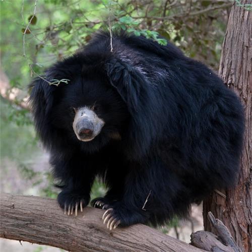 Birsa Munda Zoological Park