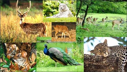 Wildlife in Jharkhand