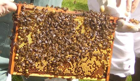 Bees Culture in JK