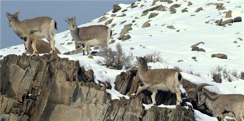 The highest National Park located in Leh Ladakh