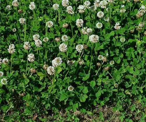 Flowers in Rajouri